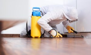 Looking For Pest Control Services In Franklin? Here's Your Guide!