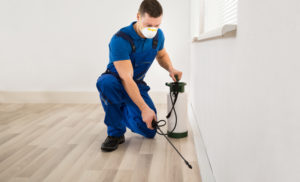 Calling Termite Control services In Sunshine Coast: Check These Aspects!