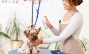 Considering Dog Grooming Business? Factors That Matter!